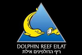 מפגש בריף הדולפינים: תורת הזן - כאן ועכשיו