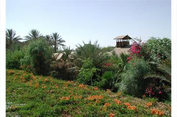 גן עדן הערבה