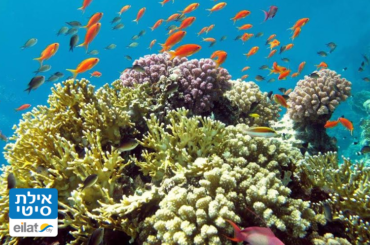 Coral Beach Nature Reserve   Red Sea Eilat Guide