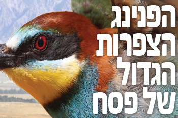 Passover at the Bird Watching Park